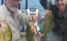 Professional Hooker Fishing Trips, Captain Yoan Alvarez, Miami, Florida, South Florida, South Florida Fishing, South Florida Fishing Guide, Fishing Guide, Professional Fishing Guide, Professional Fishing Captain, bass fishing, largemouth bass, guide service, full day, half day peacock bass, peacock bass fishing, peacock bass fishing guide, south Florida peacock fishing, big bass, Florida strain bass, record bass, servicio de guia de pesca, Lobinas, Medio dia, Todo incluido, bote marca Triton, atencion personal, pescando en Miami, guias de pesca, pesca de peacock bass, pesca de agua dulce, pesca de lagos, pescado grande, Triton boats, lake fishing, freshwater fishing, all inclusive, quality fishing equipment,